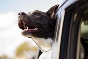 How to Secure Your Dog in Jeep Wrangler | Tips and Accessories